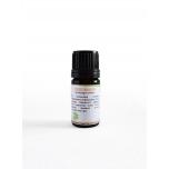 Sidrunhein/Cymbopogon citratus